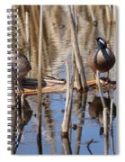 Teal Looking For Something Spiral Notebook