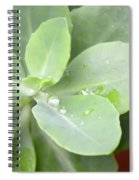 Tears Of Raindrops Spiral Notebook