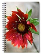 Teary Gaillardia Spiral Notebook