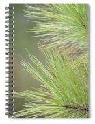 Tender Pines Spiral Notebook