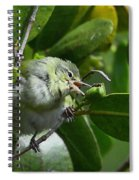 Tennesse Warbler Eating Mangrove Spiral Notebook