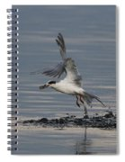 Tern Emerging With Fish Spiral Notebook