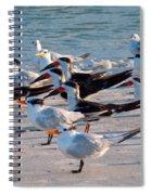Terns Spiral Notebook