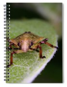 Terrestrial Turtle Bug Spiral Notebook