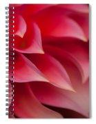 Testa Rossa Spiral Notebook