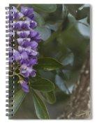 Texas Mountain Laurel Spiral Notebook