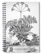 Thapsia Major Latifolia Spiral Notebook