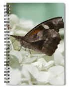 The American Snout - Libytheana Carinenta Spiral Notebook
