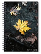 The Autumn Leaf Spiral Notebook