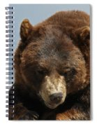 The Bear 2 Spiral Notebook