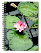 The Beauty Of Water Lily Spiral Notebook