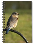 The Bluebird Of Happiness Spiral Notebook