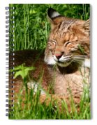 The Bobcat's Afternoon Nap Spiral Notebook