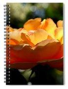 The Bronze Star Spiral Notebook
