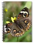 The Buckeye  Spiral Notebook