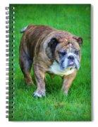 The Bulldog Shuffle Spiral Notebook