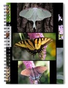 The Butterfly Collection Spiral Notebook