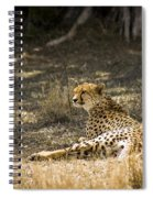 The Cheetah Wakes Up Spiral Notebook