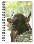 The Cow Spiral Notebook