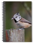 The Crested Tit Having Lunch Spiral Notebook