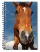 The Curious Horse Spiral Notebook