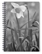 The Daffodil In Black-and-white Spiral Notebook