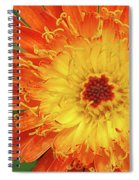 The Devil's Tongue Spiral Notebook