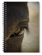 The Eyes Are The Window To The Soul Spiral Notebook