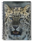 The Eyes Of A Jaguar Spiral Notebook