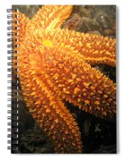The Great Starfish Spiral Notebook