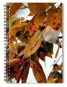 The Hickory In Autumn 2 Spiral Notebook