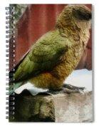 The Intelligent Kea Spiral Notebook