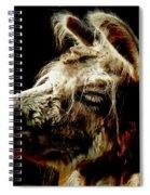 The Legendary Llama  Spiral Notebook