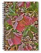 The Lenten Rose Spiral Notebook