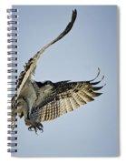 The Magnificent Osprey  Spiral Notebook