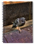 The Mighty Pigeon Spiral Notebook