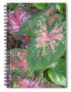 The Mosaics Spiral Notebook