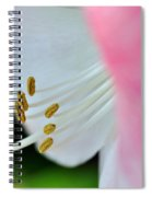 The Naked Lady - Hippeastrum Spiral Notebook