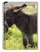 The New Arrival Spiral Notebook