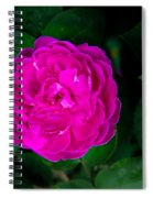 The Old Red Rose Spiral Notebook