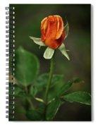 The Orange Rose Spiral Notebook