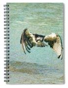 The Osprey Glare Spiral Notebook