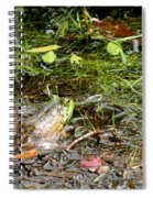The Patient Frog Spiral Notebook