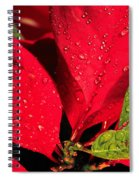 The Poinsettia Spiral Notebook