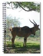 The Postcard Spiral Notebook