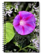 The Queen's Morning Glory Spiral Notebook