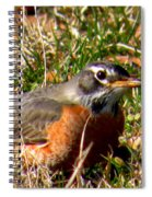 The Robin Stare Spiral Notebook