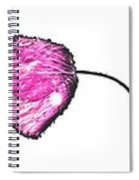 The Seven Poppies  Spiral Notebook