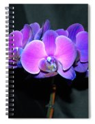 The Shade Of Orchids Spiral Notebook