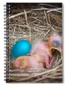 The Shimmering Blue Egg Spiral Notebook